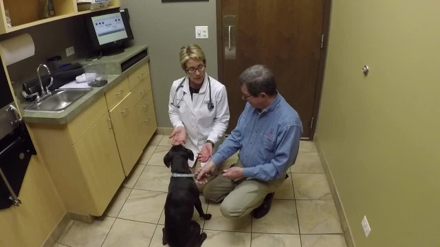 GreenTree Animal Hospital
