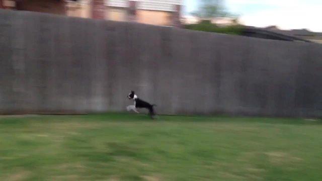 Lola Running