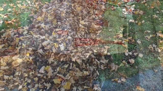 Fall Leaf Video